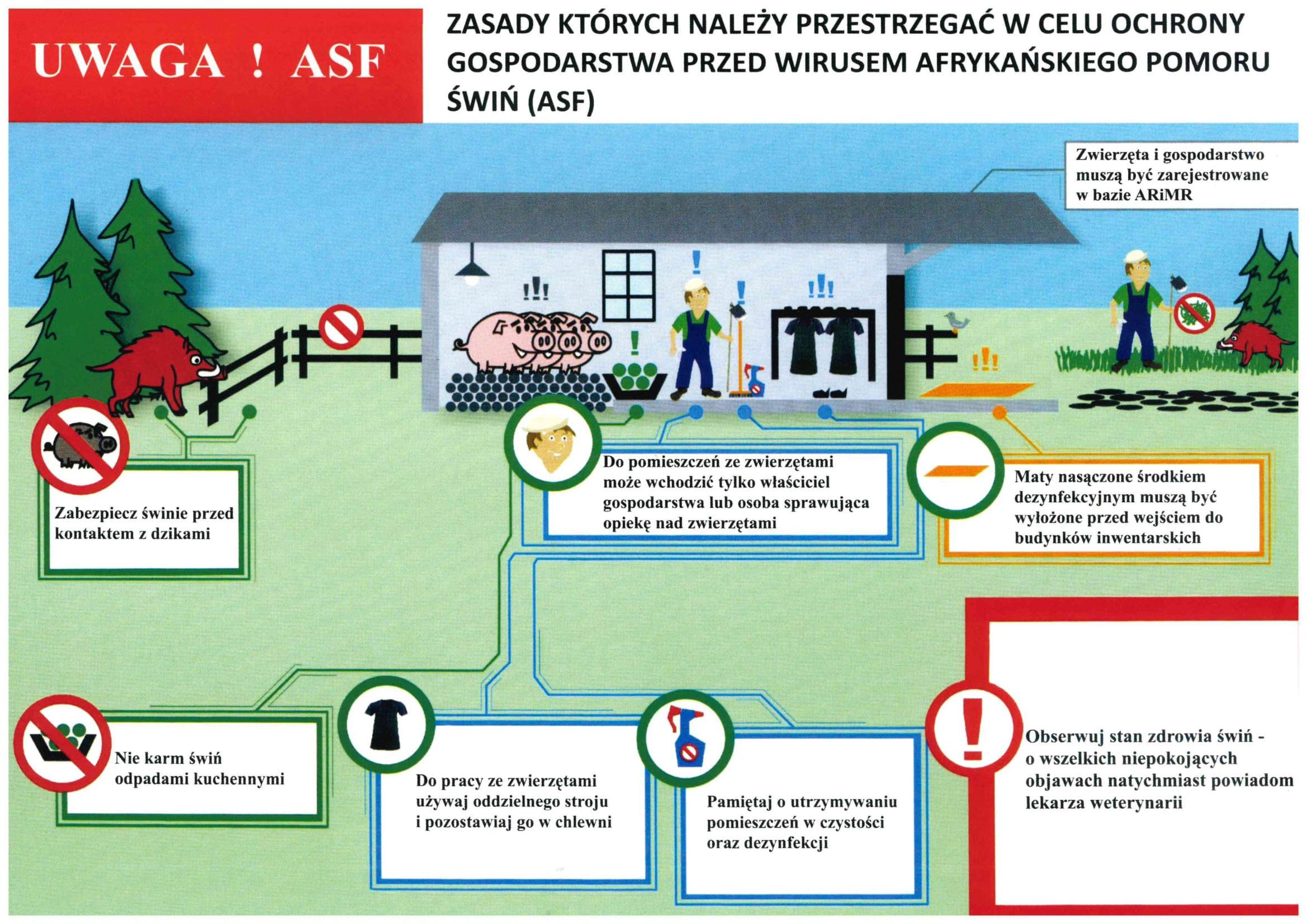 Zasady bioasekuracji w hodowli świń (ochrona przed ASF)