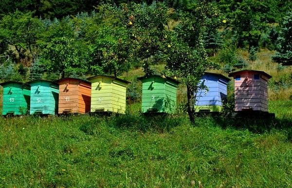 Informacja dla pszczelarzy